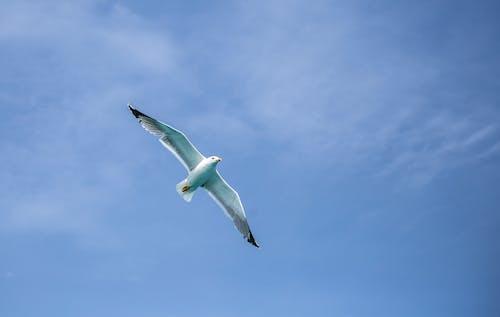 Бесплатное стоковое фото с голубое небо, птица, средиземноморский, чайка