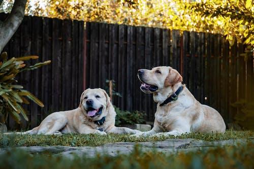 가정의, 개, 개의, 귀여운의 무료 스톡 사진