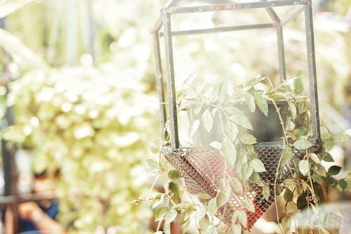 模糊, 漂亮, 白日夢, 美在自然中 的 免費圖庫相片