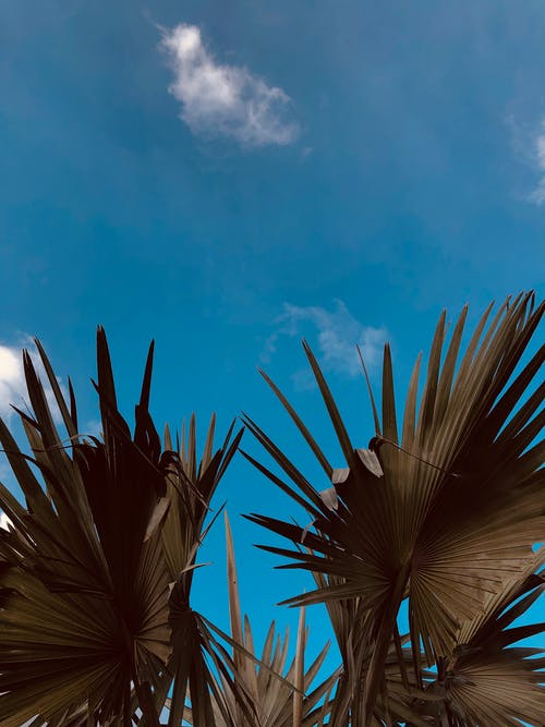 Foto d'estoc gratuïta de arbres nus, cel blau, cel clar, cels ennuvolats