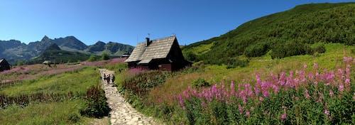 tatry, 경치, 산, 스카이라인의 무료 스톡 사진