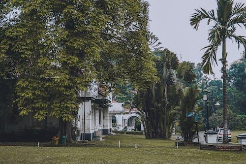 Foto profissional grátis de árvores, bogor, campo verde, casa antiga