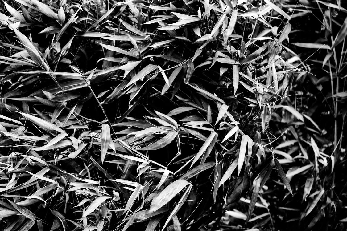 black and white, BW photography, leaves