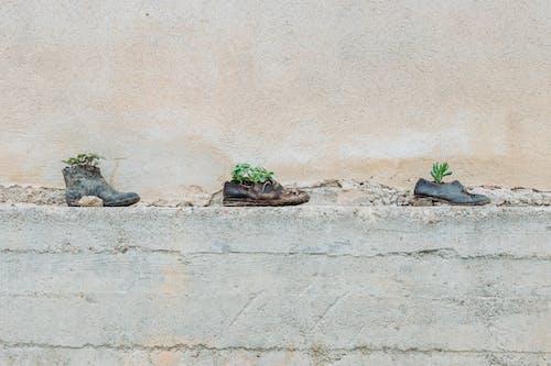 Základová fotografie zdarma na téma architektura, bota, boty, budova