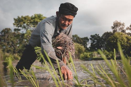 Základová fotografie zdarma na téma farma, farmář, muž, orná půda