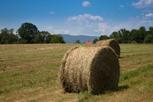 คลังภาพถ่ายฟรี ของ agbiopix, bails, การเกษตร, หญ้าแห้ง