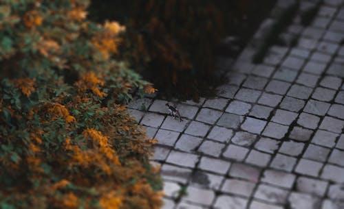 Darmowe zdjęcie z galerii z bokeh, dżungla, kafelki, kot