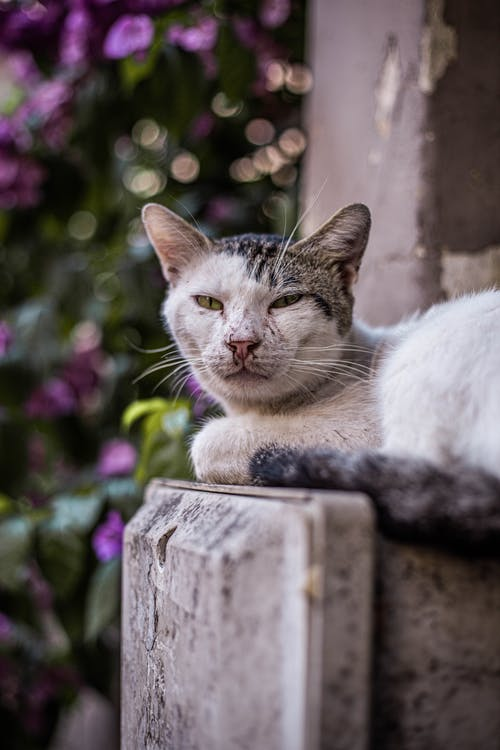 Fotobanka sbezplatnými fotkami na tému animales, gato, gatos, mačka