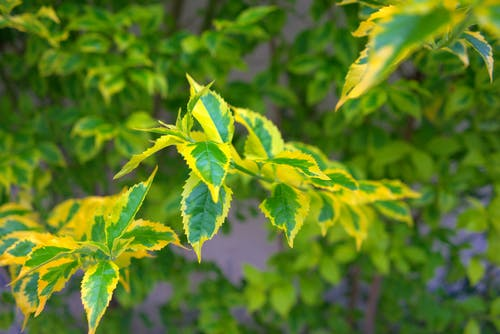 Free stock photo of green, leaves