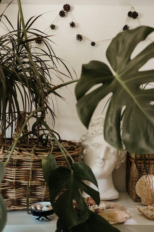 Darmowe zdjęcie z galerii z dekoracja, drewno, drzewo, flora