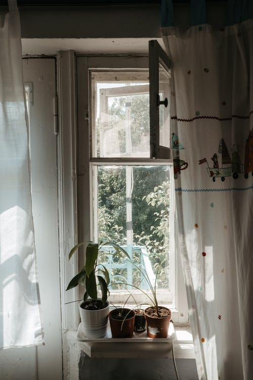Shallow Focus Photo of Green Plants Beside Window