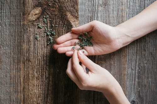 A Person's Hands With Herbs