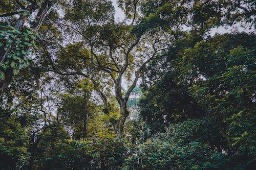 Foto profissional grátis de árvores, árvores altas, bogor, ecológico