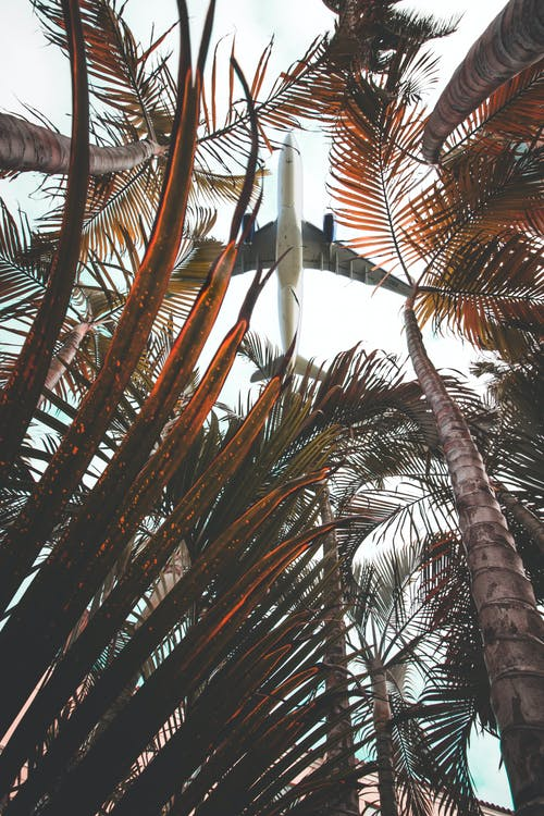 Low Angle View of Plane Passing Above Coconut Trees