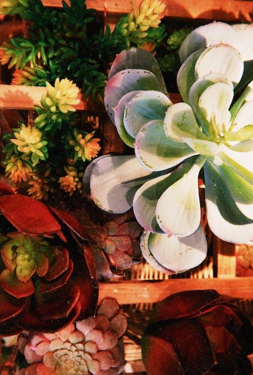 人造花, 充滿活力, 大自然, 天性 的 免費圖庫相片