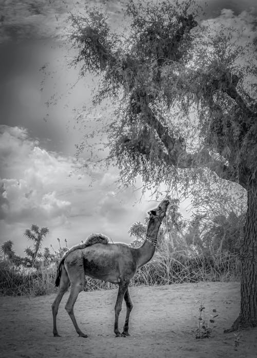 Immagine gratuita di Adobe Photoshop, adorabile, albero, animali