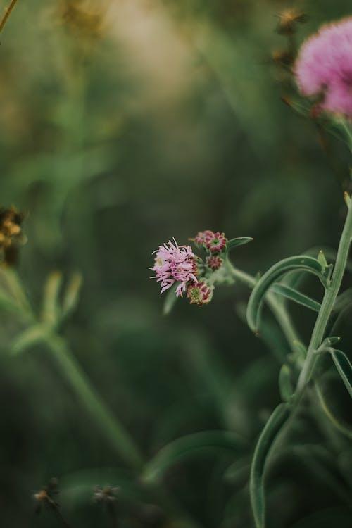 Gratis stockfoto met bloem, donkergroen, donkergroene planten, mooie bloem