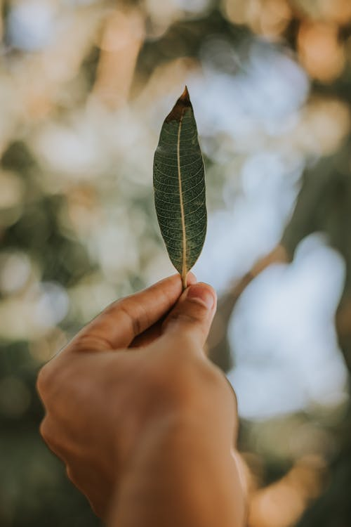 Shallow Focus Photo of Person Holding Green Leaf