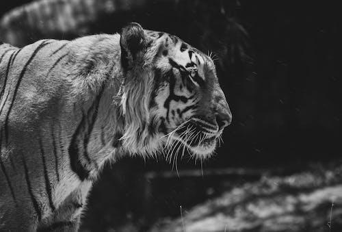คลังภาพถ่ายฟรี ของ photographersofindia, การถ่ายภาพ, การถ่ายภาพสัตว์ป่า, ชาวอินเดีย