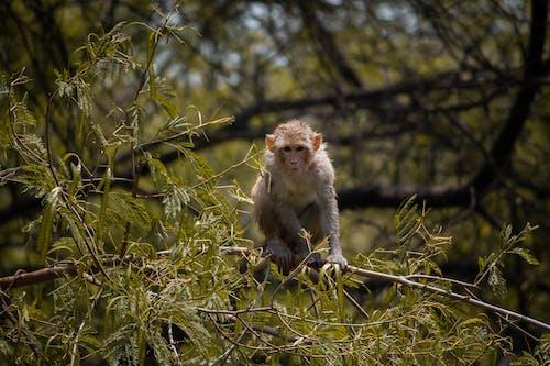 คลังภาพถ่ายฟรี ของ animalsphotos, delhite, wildlifephotos, การถ่ายภาพ