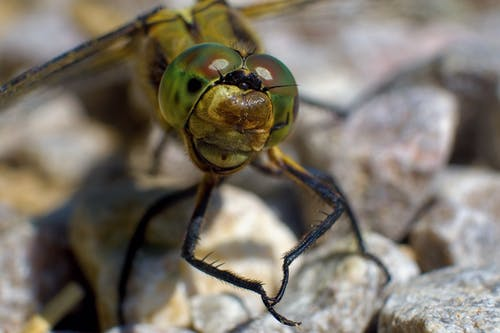 Free stock photo of dragonfly, eyes, insect, macro