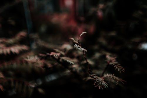 Free stock photo of after the rain, autmn, blur