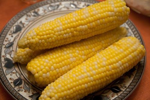 คลังภาพถ่ายฟรี ของ agbiopix, การเกษตร, ข้าวโพดบนซัง, สีเหลือง