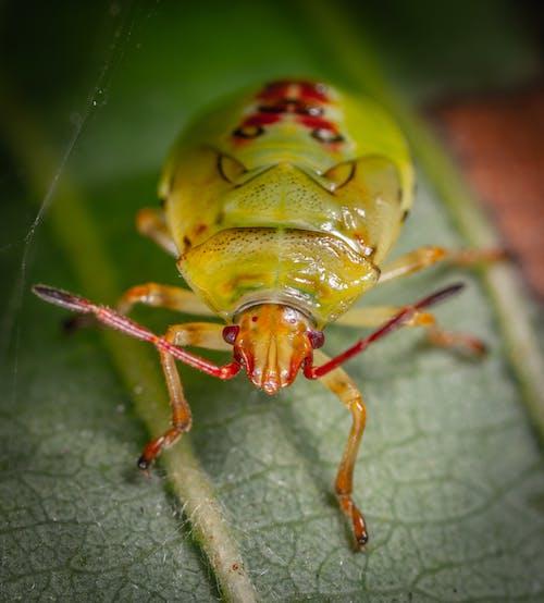 곤충, 곤충학, 녹색, 동물의 무료 스톡 사진