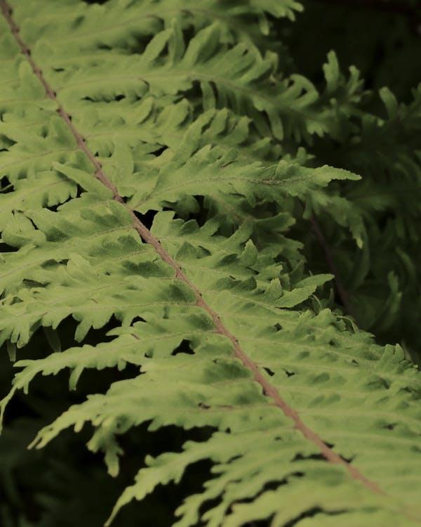 シダ, シダの葉, バックグラウンド