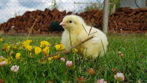 Imagine de stoc gratuită din culoarea verde, flori frumoase, flori galbene, galben