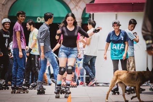 개, 광장, 멋진, 사각형의 무료 스톡 사진