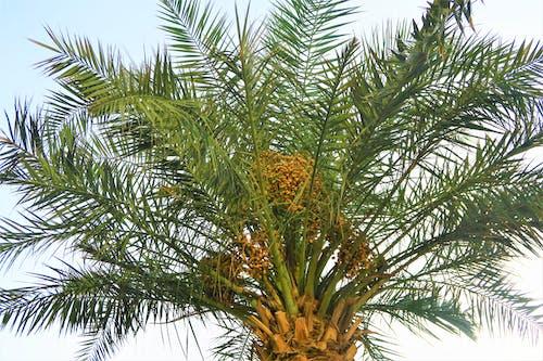 Foto stok gratis alam, bitki, buah, cabang