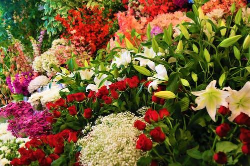 Foto stok gratis alam, berwarna merah muda, bunga lili, bunga-bunga