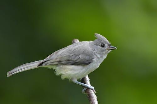 Foto stok gratis bokeh, burung, burung abu-abu dan putih, latar belakang hijau sedang