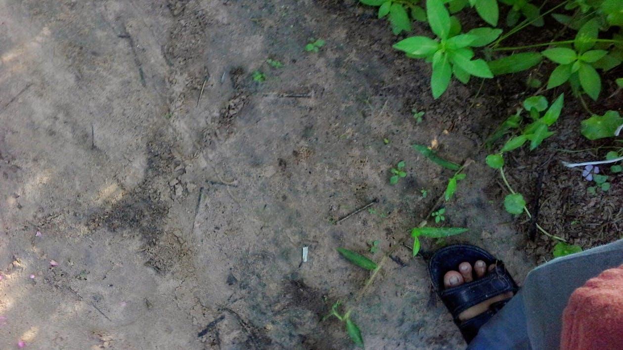 Free stock photo of ทุ่งนา, ปลอดสารพิษ, ต้นไม้