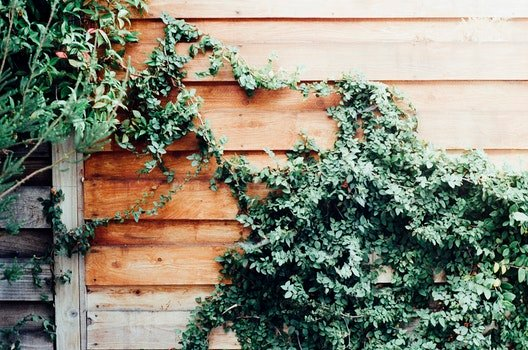 Free stock photo of fence, overgrown, ivy