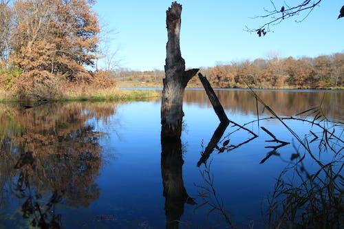Photos gratuites de automne, bassin, couleurs automnales, eau bleue