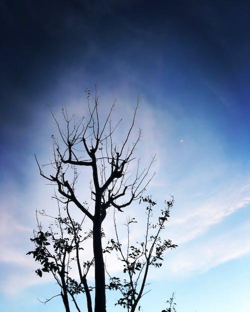Gratis stockfoto met blauw, boom, donker, hemel