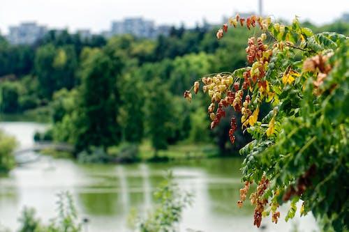 Darmowe zdjęcie z galerii z budynki, drzewa, gałąź, jezioro