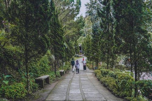 Foto profissional grátis de árvores, beleza na natureza, ecológico, floresta