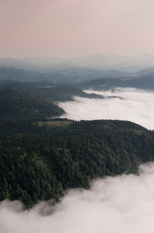 açık hava, ağaçlar, akşam karanlığı, atış içeren Ücretsiz stok fotoğraf