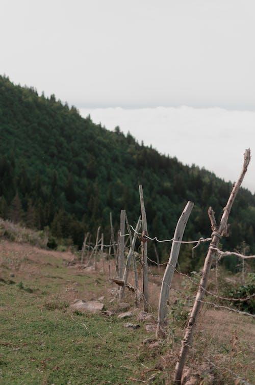 和平的, 天性, 寧靜, 寧靜的 的 免費圖庫相片