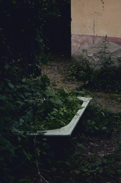 Fotos de stock gratuitas de abandonado, al aire libre, bañera, brillante