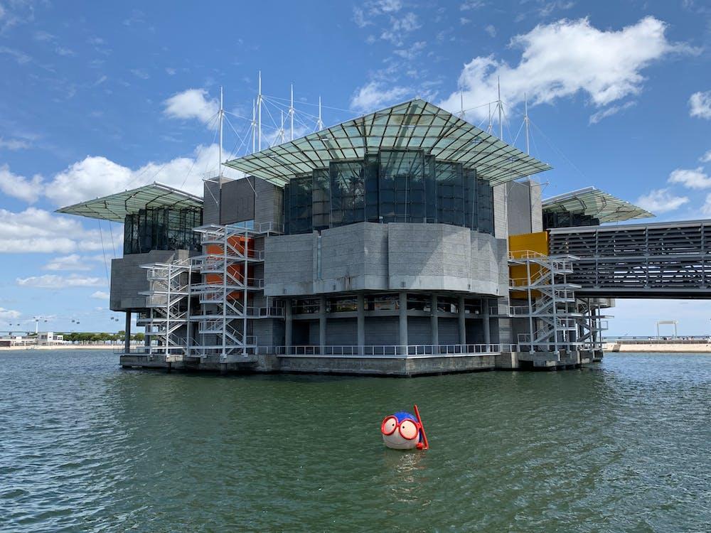 Бесплатное стоковое фото с Аквариум, архитектура, море