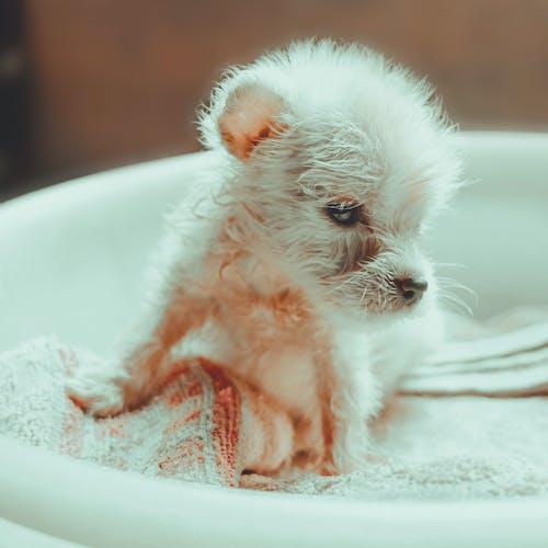 Foto profissional grátis de borrão, cachorrinho, cachorro, cânone