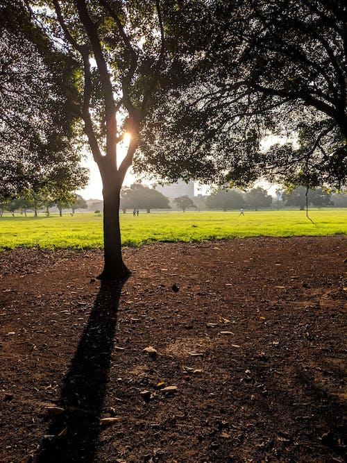 Бесплатное стоковое фото с зеленый, игровая площадка, красивый пейзаж