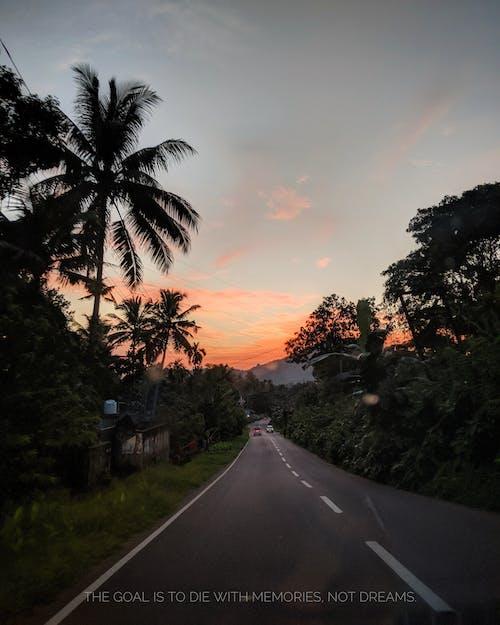 Бесплатное стоковое фото с pinksky, джунгли, дорога