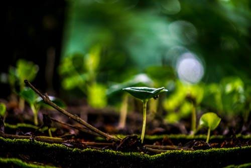 Безкоштовне стокове фото на тему «розмиття, темно-зелений»