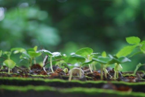 Безкоштовне стокове фото на тему «зелений, розмиття, сільське господарство»
