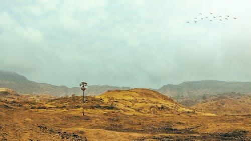 Бесплатное стоковое фото с вид, горный туризм, горы, дневной свет